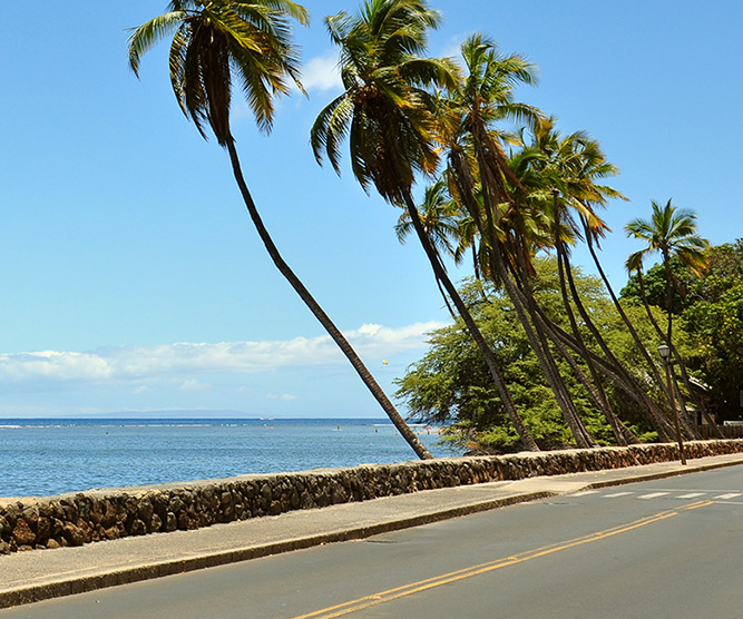 road on the islands of tahiti with the lagoon in background and palms