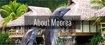 About Moorea