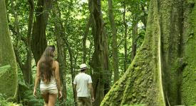 Photo of a woman and a man walking in the woods in Moorea