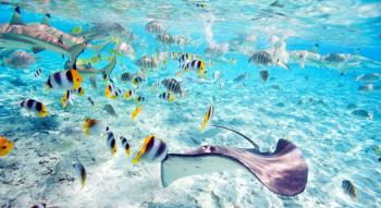 Illustration: Dive, Dine and Unwind  - Rangiroa and Moorea with Half Board and Dive package