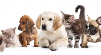 Photo of baby dogs and cats