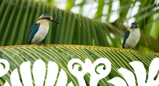 birds on a palm tree in the marquesas islands