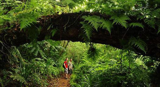 Two men exploring the tropical vegetation in the islands of Tahiti