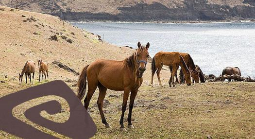 horses in the marquesas islands