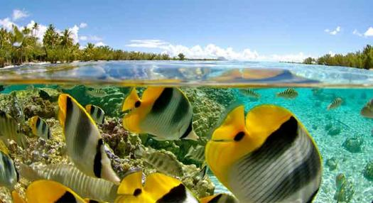 tropical fish in Taha'a