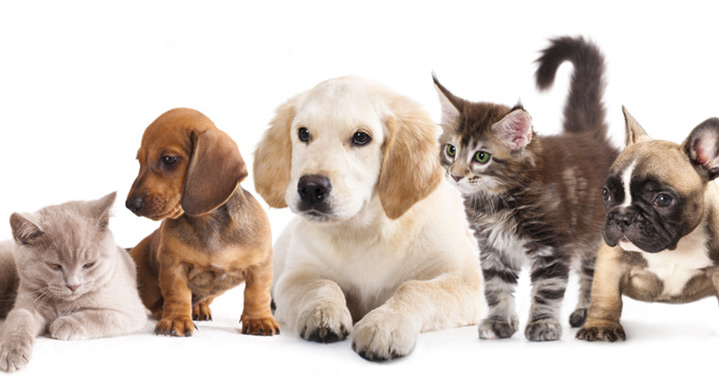 Traveling with Pets - Travel Information | Air Tahiti Nui